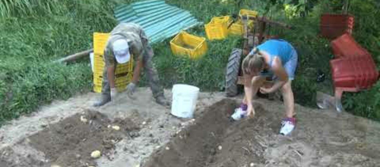 Asl5, progetto di agricoltura sociale a Campo del Vescovo